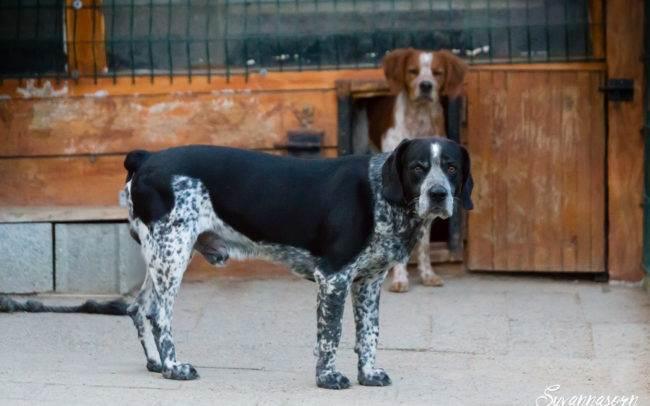 dog chien petshoot petbook animaux animal outdoor exterieur photographe photographer geneva geneve seance photo shoot shooting
