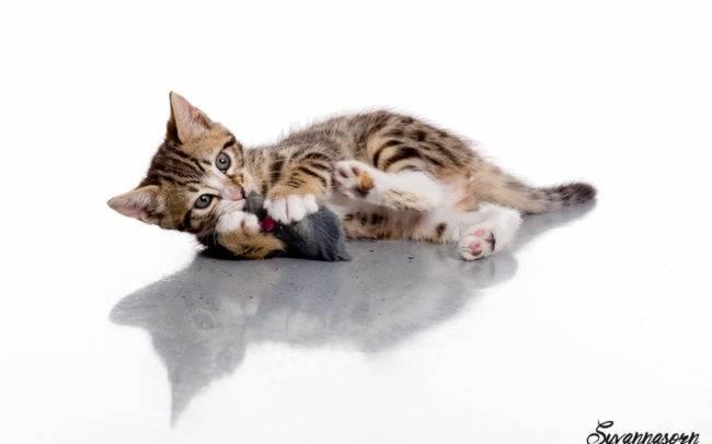 photographe petshoot petbook animaux chat chaton geneve geneva studio