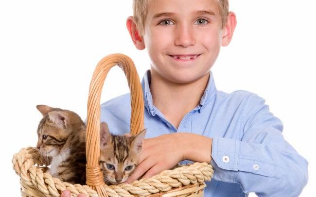 photographe petshoot petbook animaux chat chaton geneve geneva enfant portrait