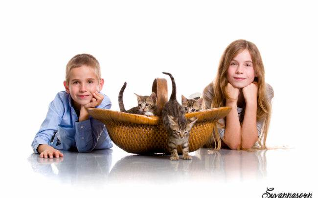 photographe petshoot petbook animaux chat chaton geneve geneva enfant portrait
