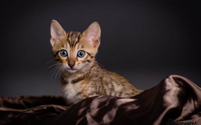 photographe petshoot petbook animaux chat chaton geneve geneva studio