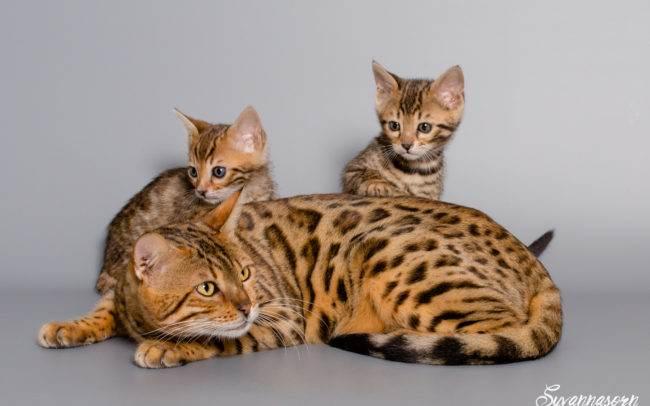 chat petbook petshoot animaux pet seance photo shoot shooting geneve photographe famille chaton