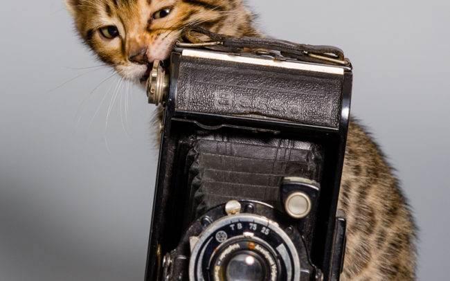 chat petbook petshoot animaux pet seance photo shoot shooting geneve photographe chaton