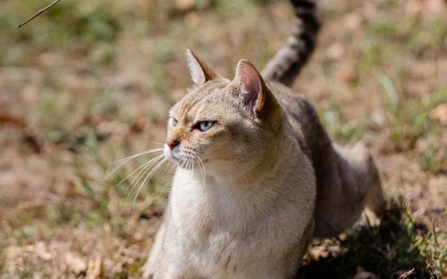 Séance photo en extérieur avec un chat