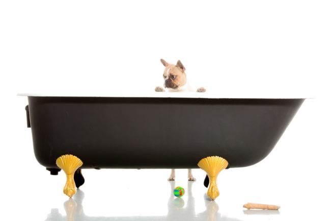 séance photo genève geneva photographe dog chien petbook petshoot animaux animal